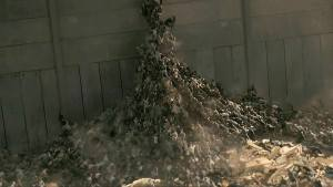 World War Z muro
