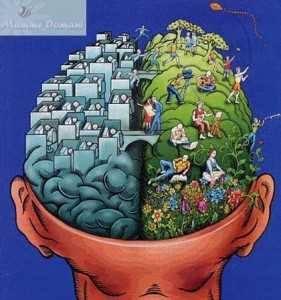 Cerebro hemisferios