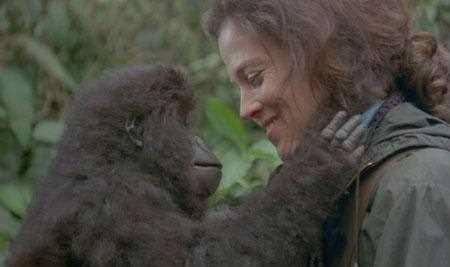 25 a os instituto andaluz mujer pateando el mundo for Gorilas en la niebla